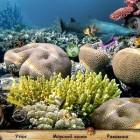Играть Поиск предметов: Секреты моря онлайн